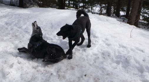 im Schnee_2
