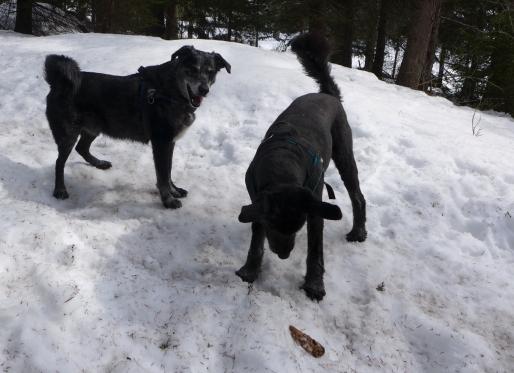 im Schnee_3