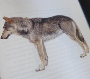 wolfe_3